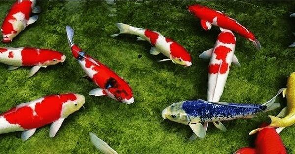Ý nghĩa giấc mơ về cá